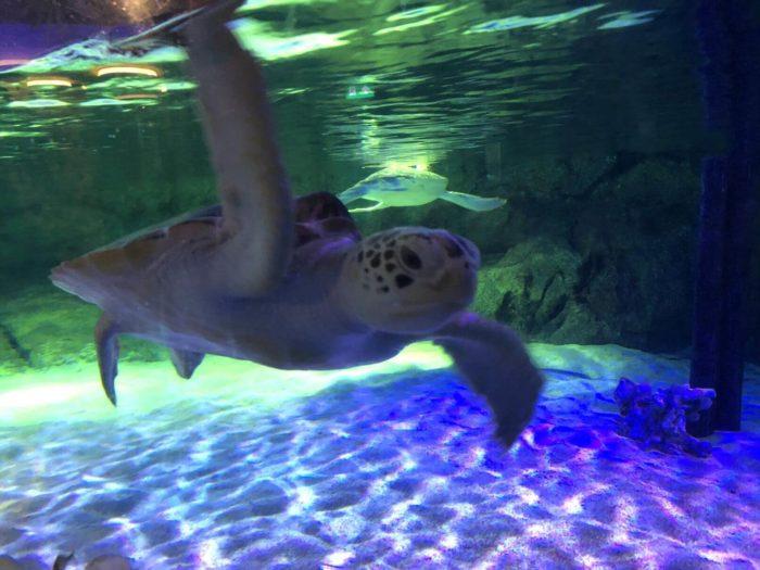 Želva Sea life Bangkok