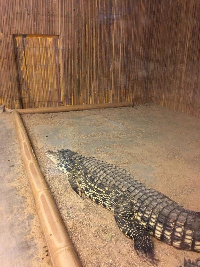 ZOO Dvorec krokodýl