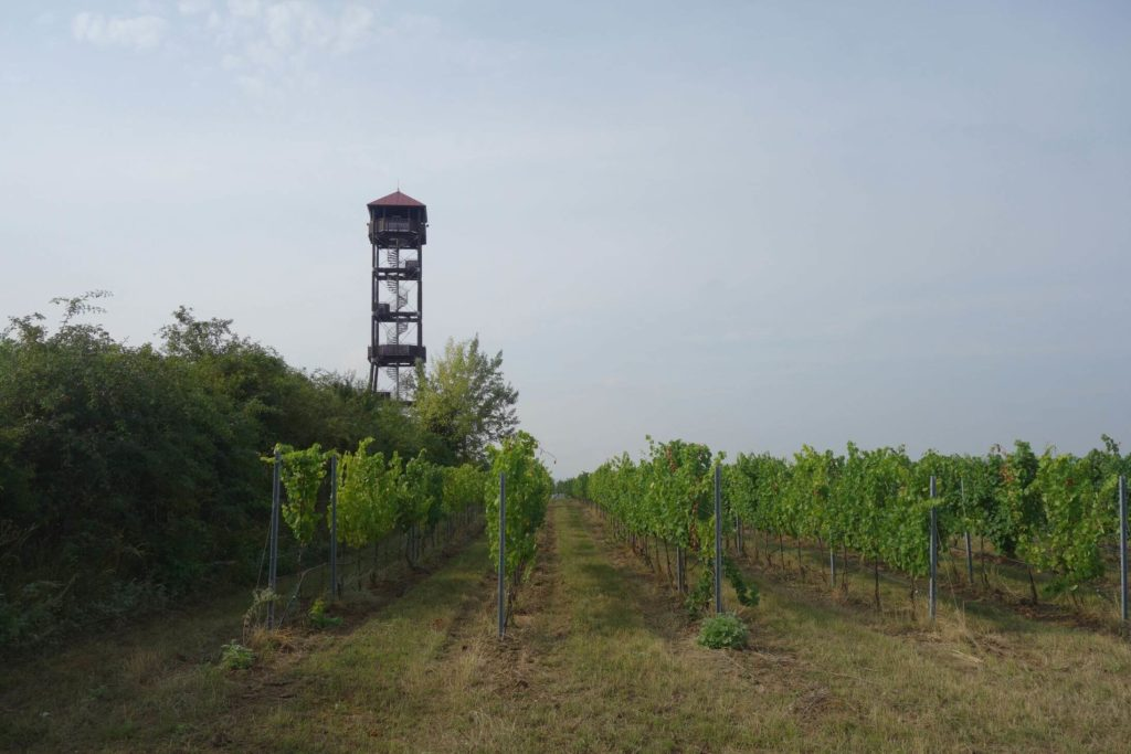 Maják vinice