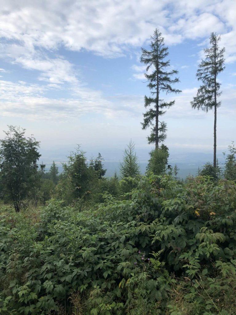Příroda v Tatrách