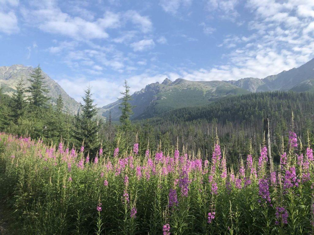 Velická dolina příroda