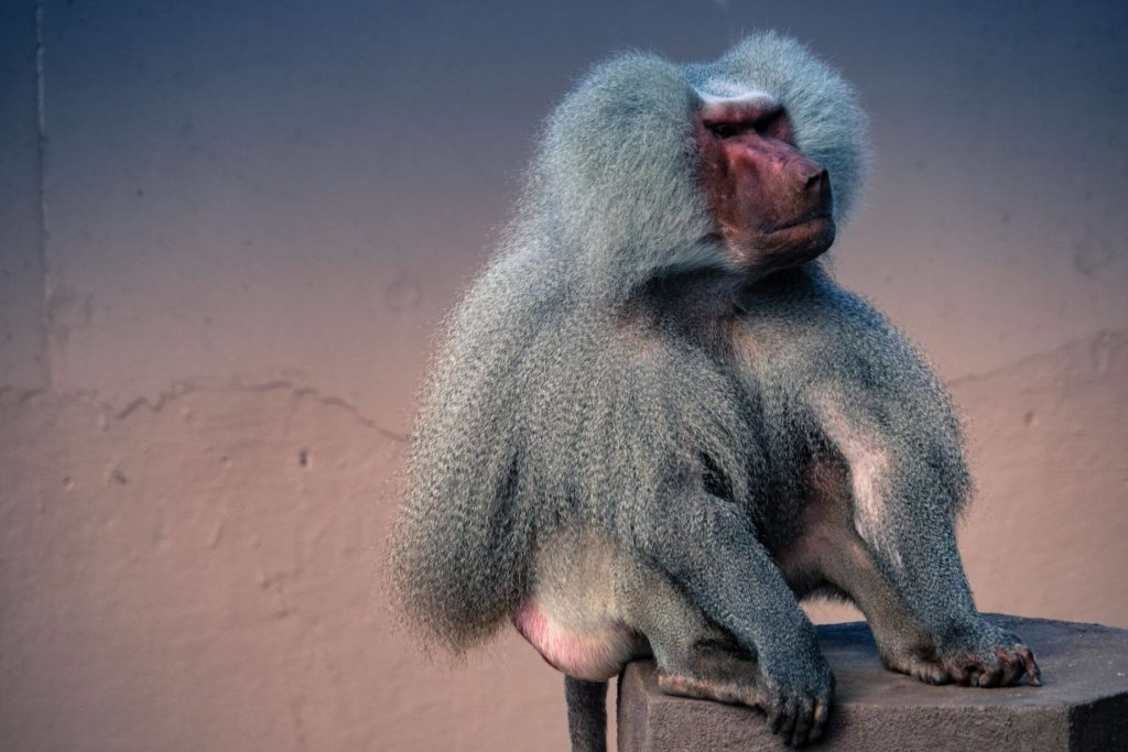 Zoo Kodaň opice