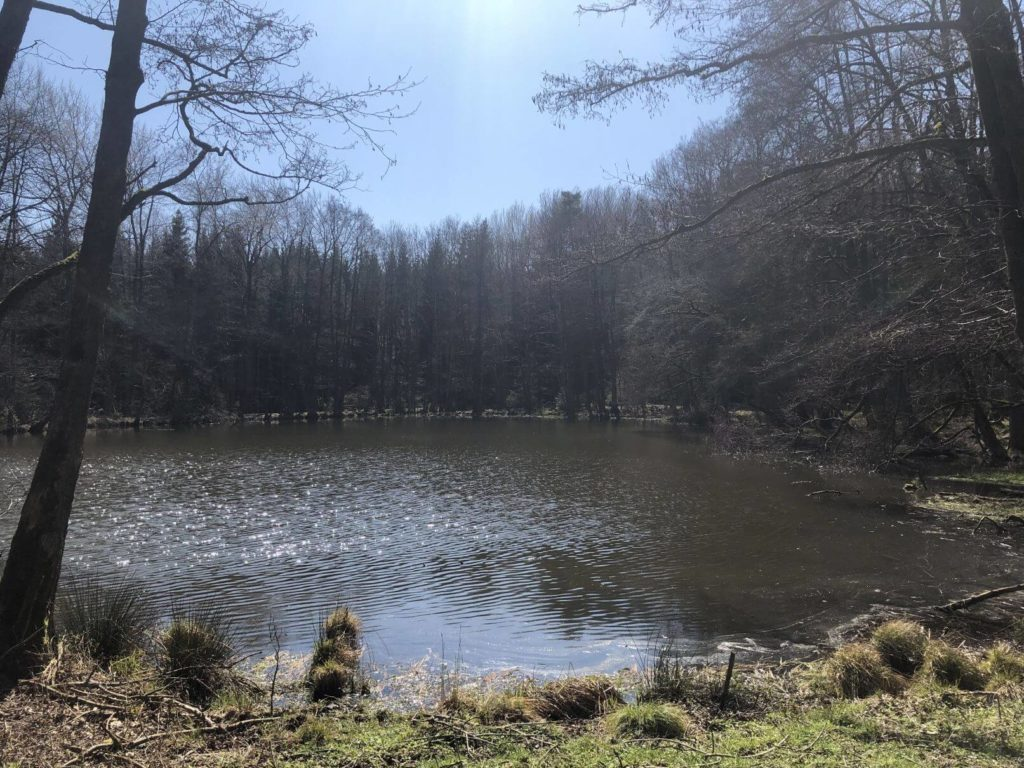 Hlubocké rybníky