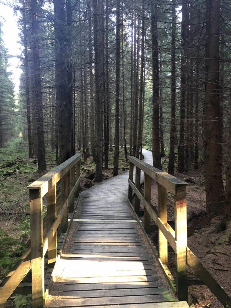 Kladská stezka lesem