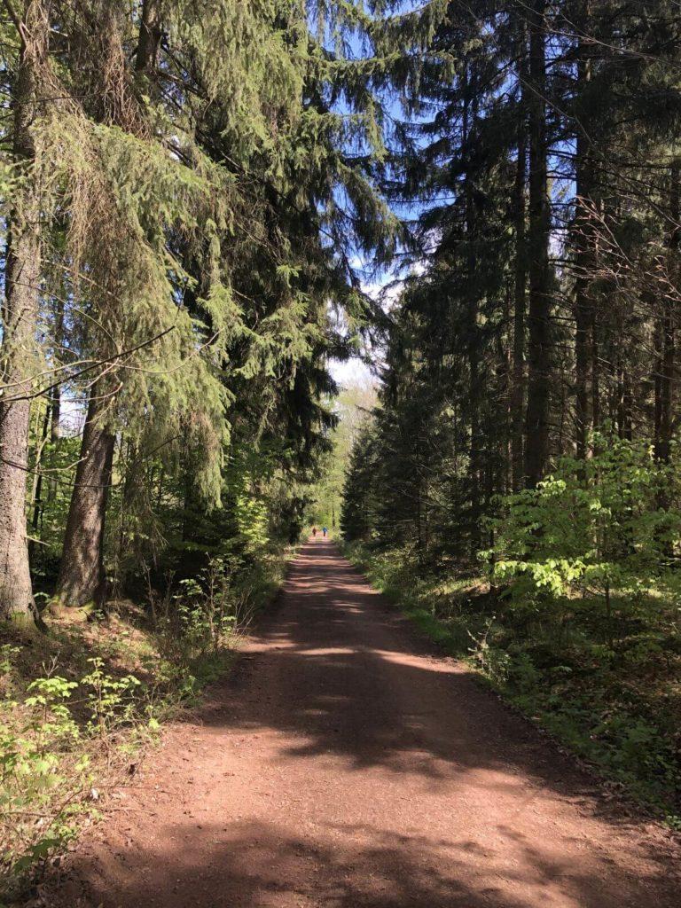 Cesta na rybníky
