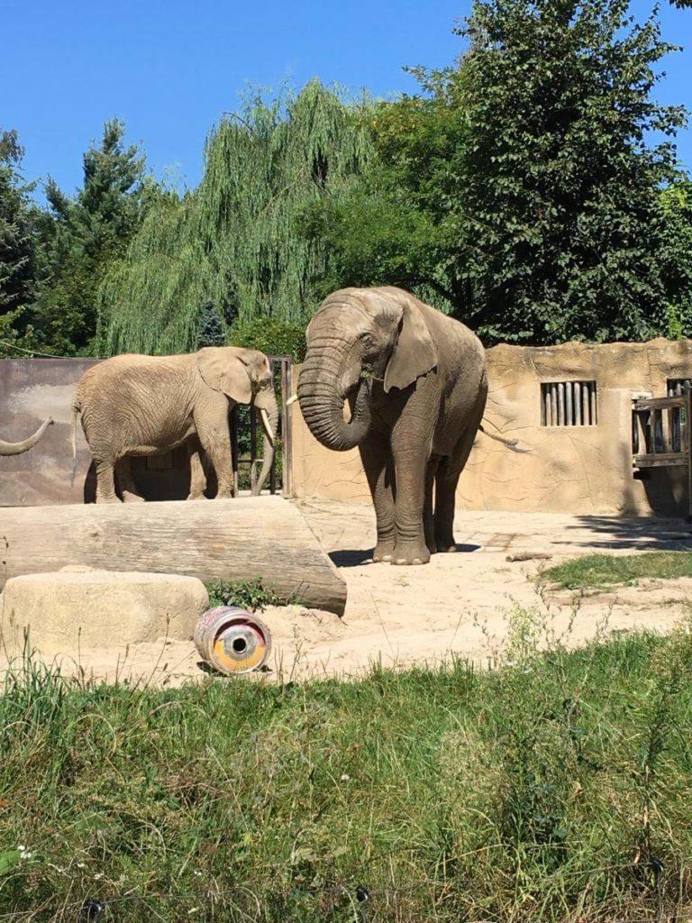 Dvůr Králové sloni
