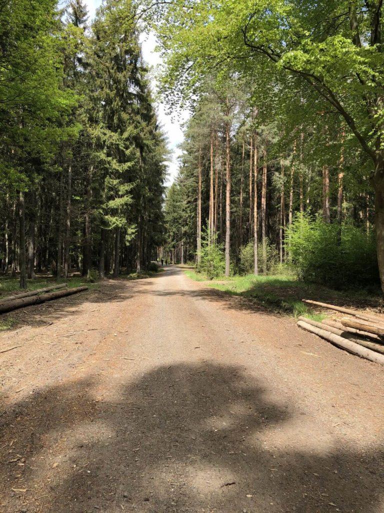 Lesní cesta Kokotsko