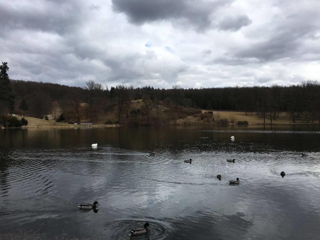 Lopatský rybník