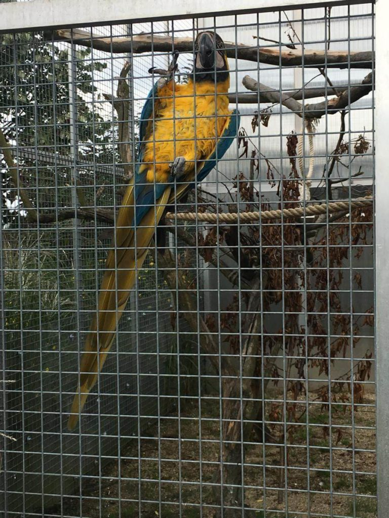Papoušci v zoo Tábor