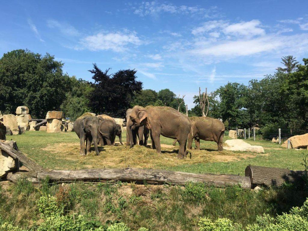 Praha zoo sloni