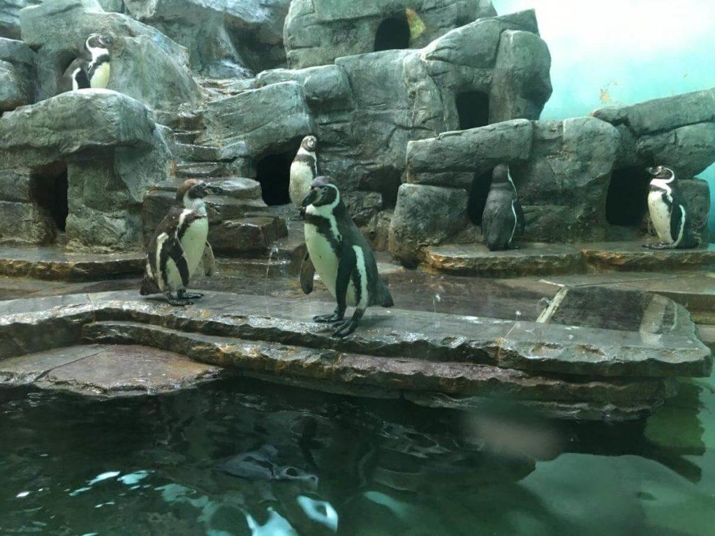 ZOO Praha tučňáci