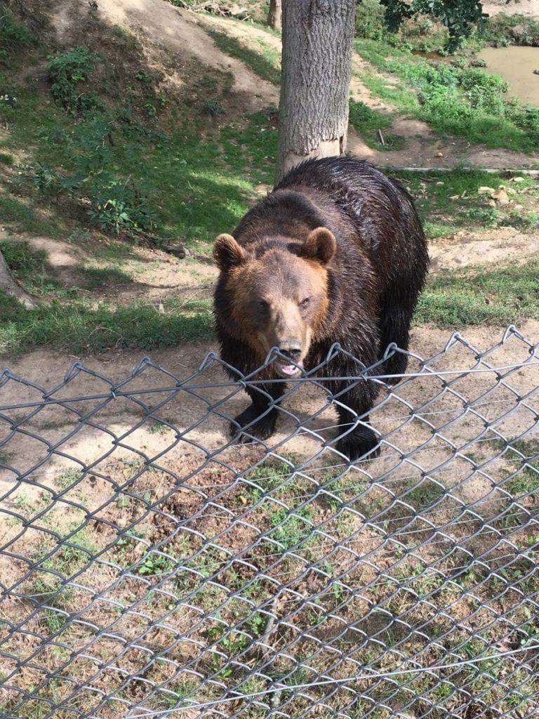 ZOO Tábor medvěd