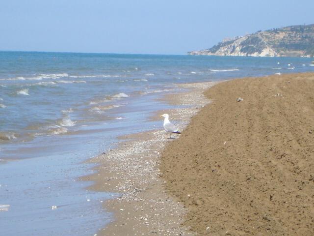 Racek na pláži Rodi Garganico