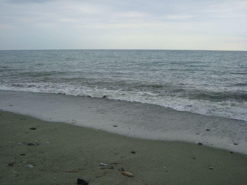 Leptokaria moře