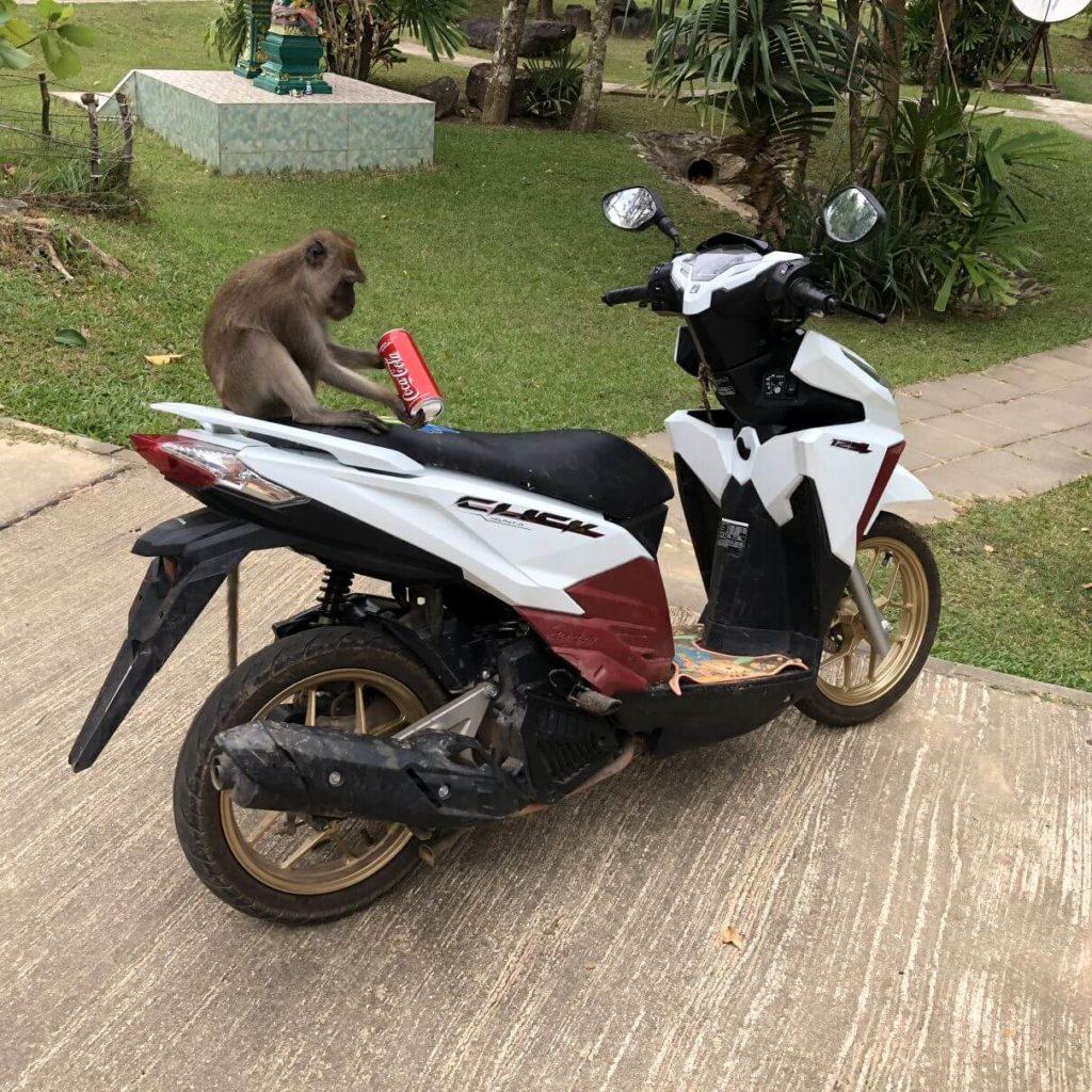 Opice na motorce