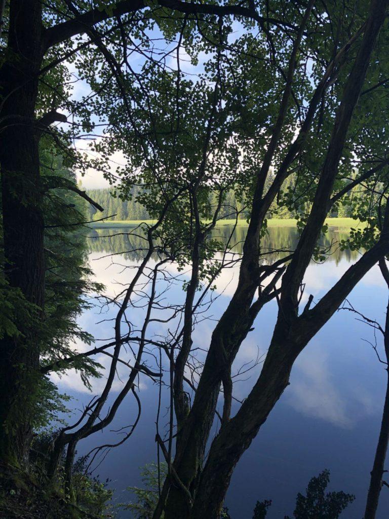 Huťský rybník Žofín