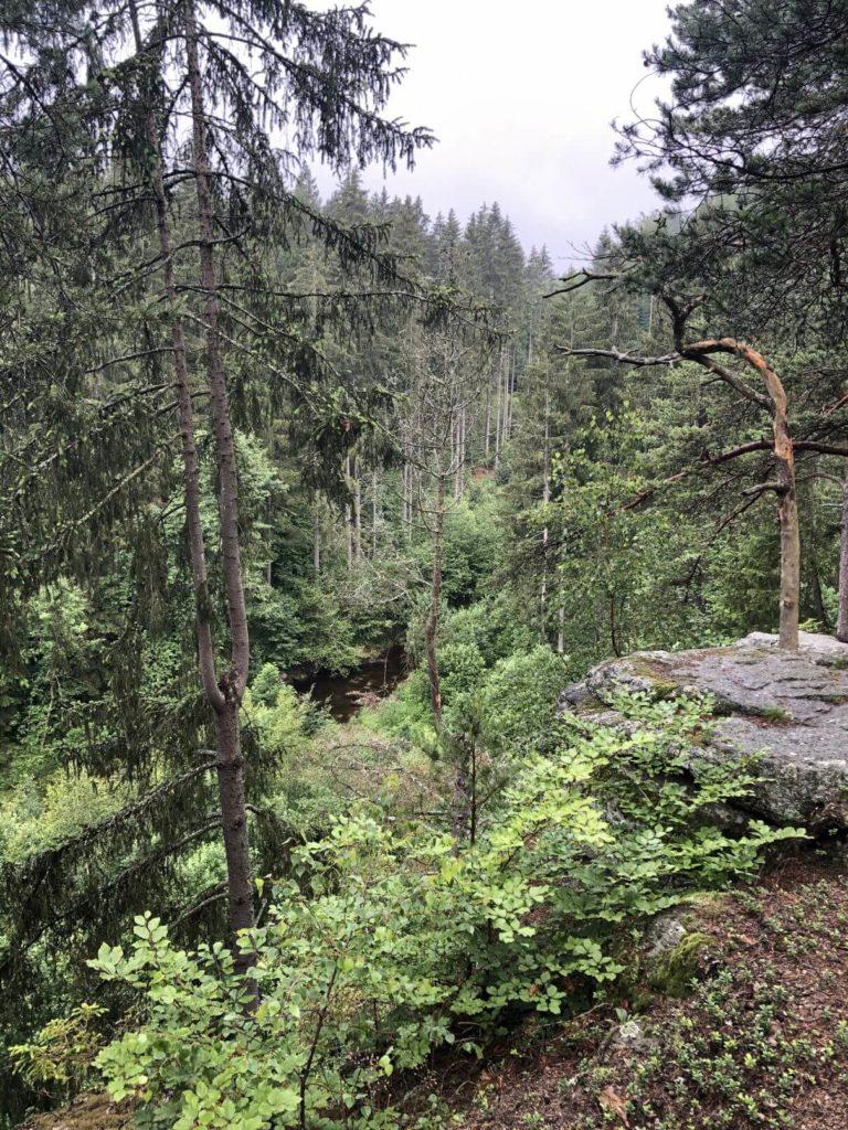 Les v okolí Sokolčí