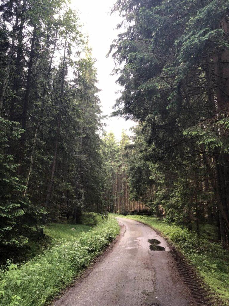 Nedaleko Žofínského pralesa