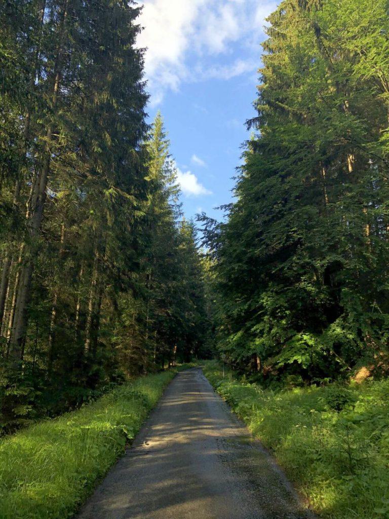 Trasa Žofín