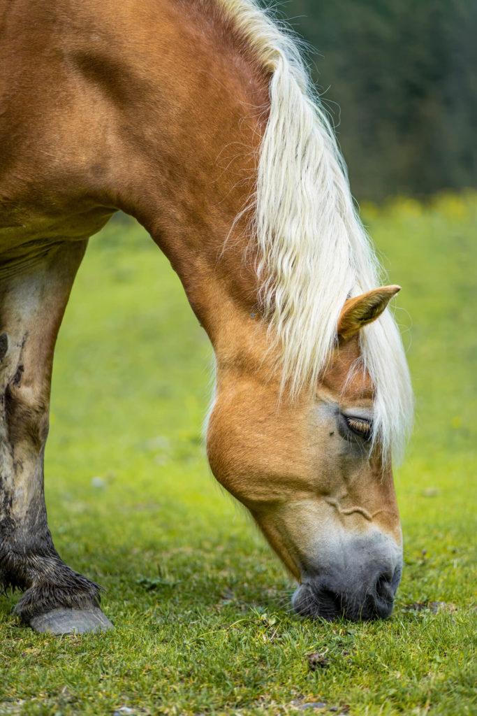 Kůň Hintersee