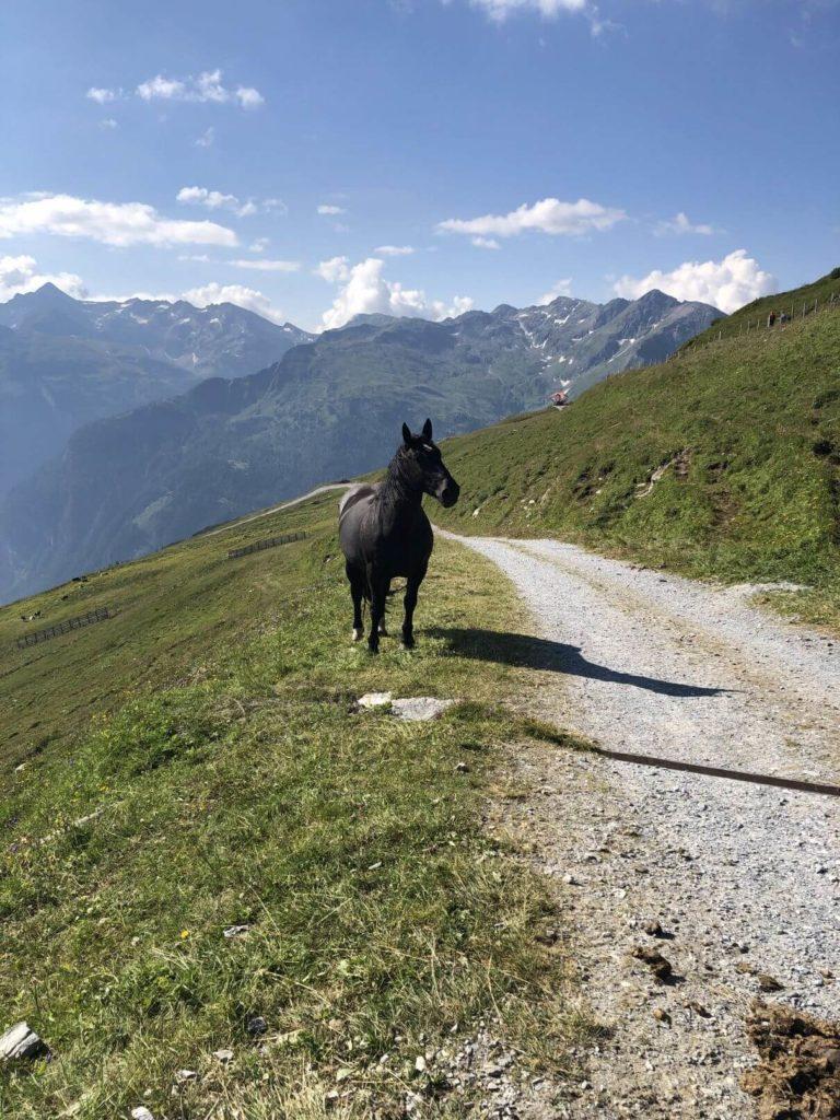 Kůň Stubnerkogel