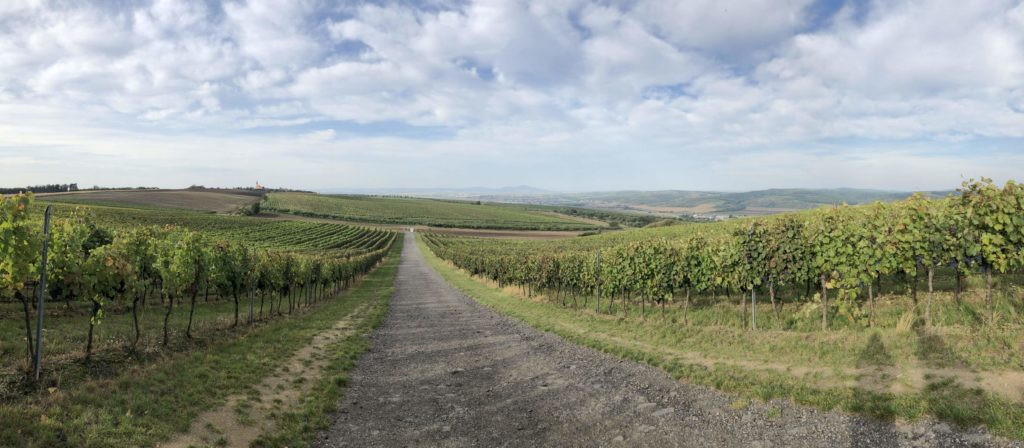 Cesta vinohradem