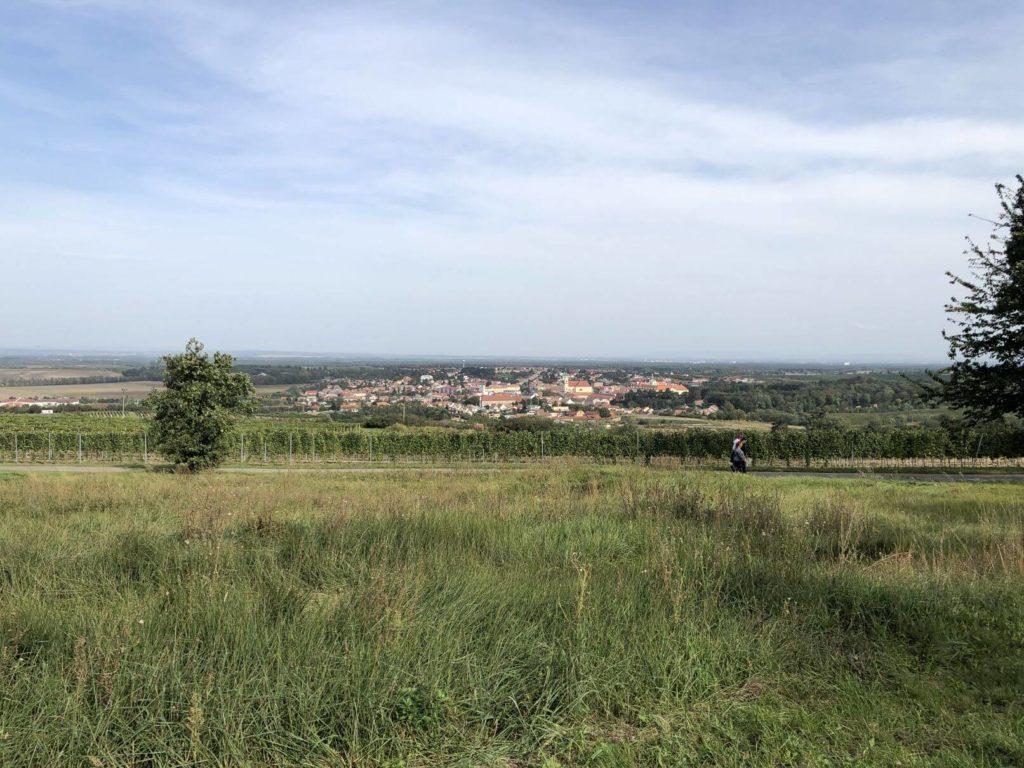 Pohled na vinohrad