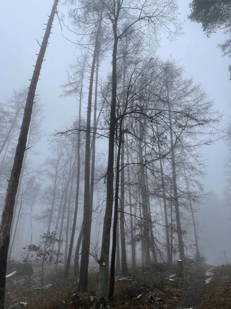 Les Čižice