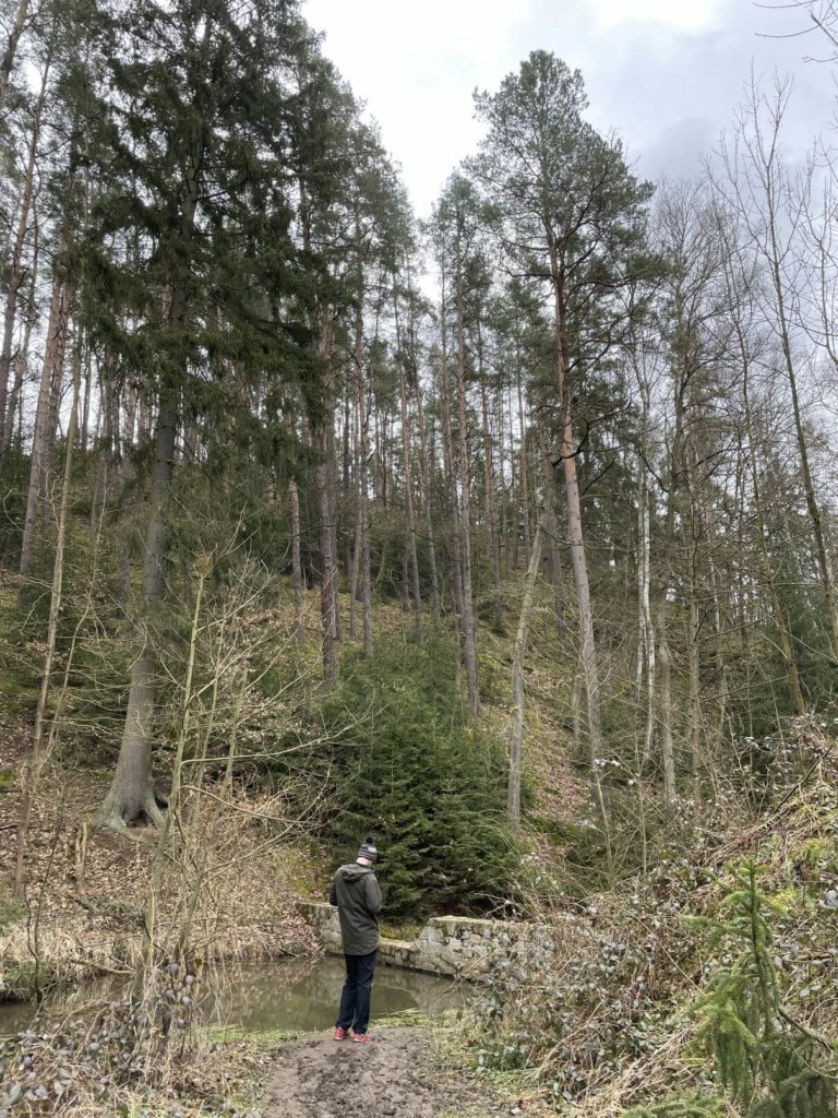 Radčice - v lese