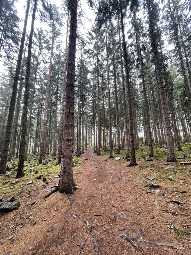 Brdský les