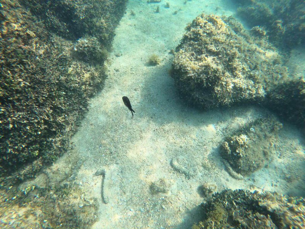 Pod mořem Poreč